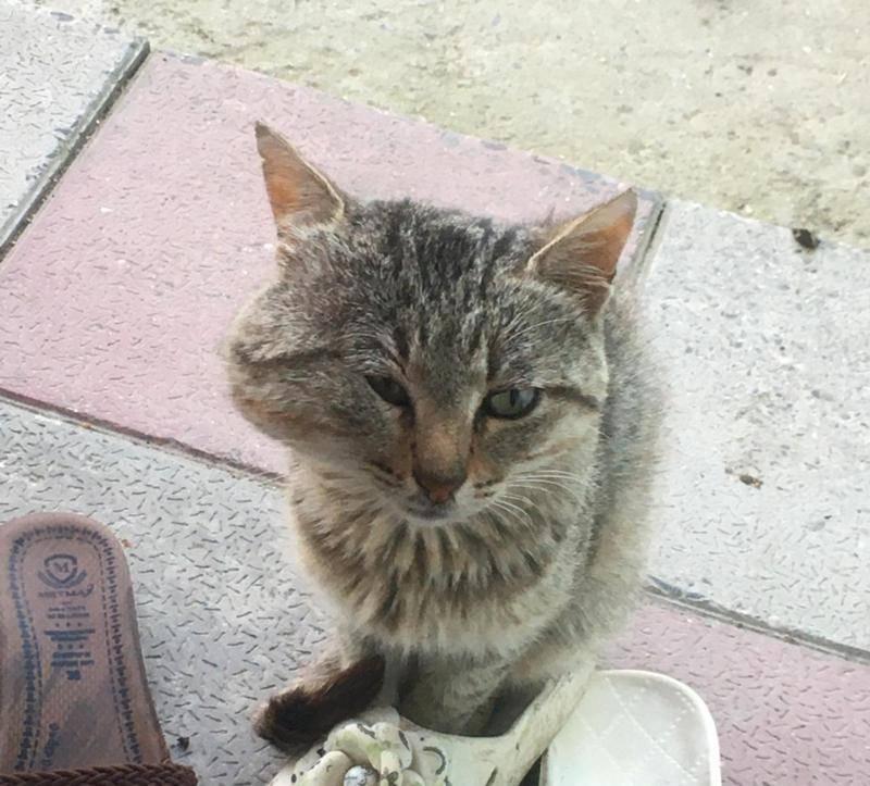 Что делать если у кота опухла щека?