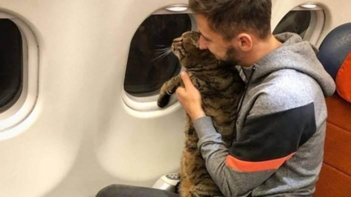 Как отправиться в путешествие с кошкой. о правилах и основах перевозки