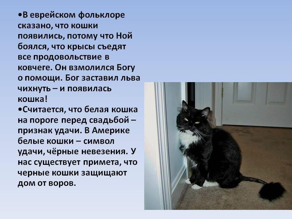 Кошки: все поверья и суеверия