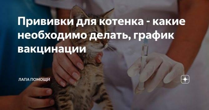 Сколько стоит прививка для кошек от лишая