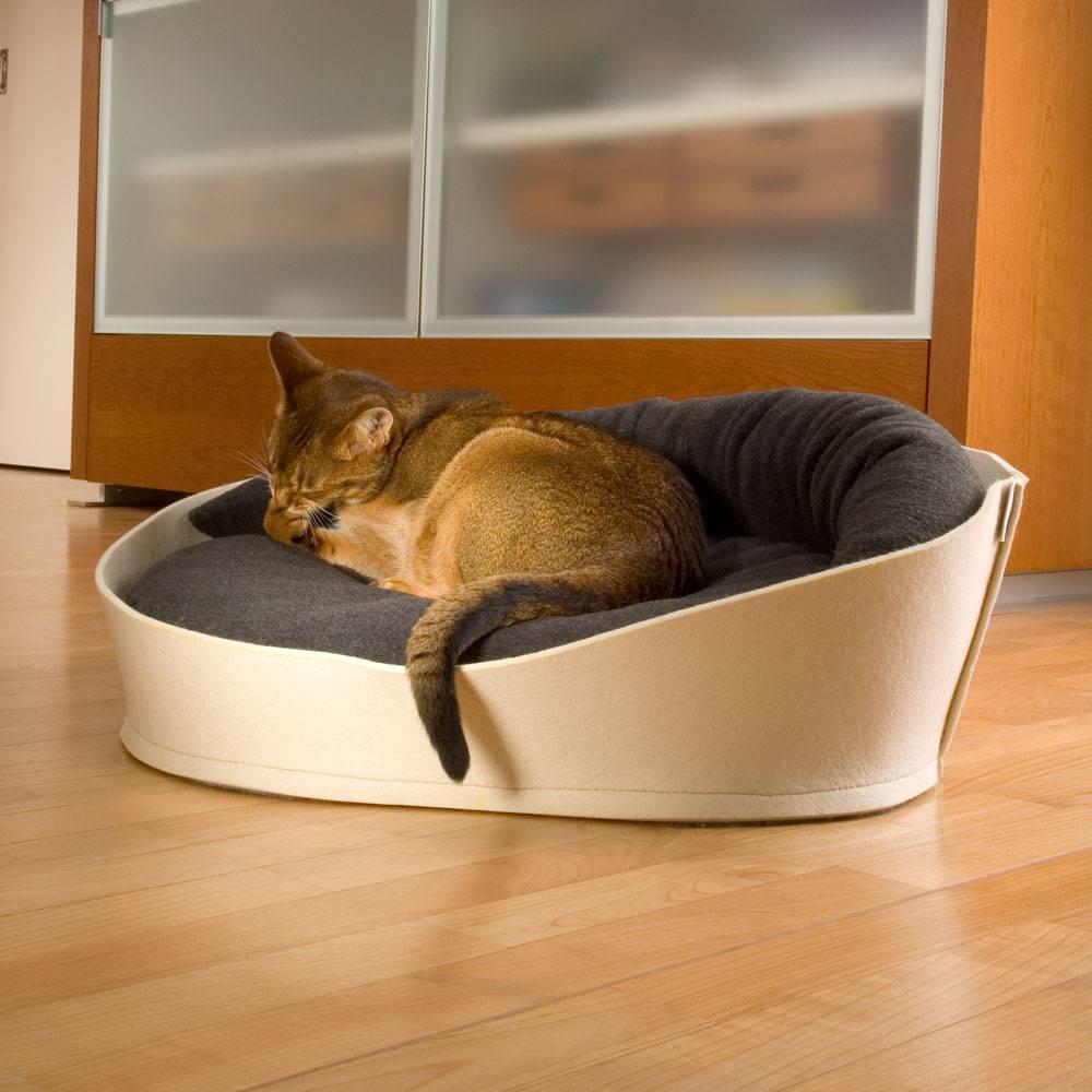Как приучить кошку ночью спать? как приучить кота к лежанке: рекомендации владельцам как приучить котенка спать в одной комнате.