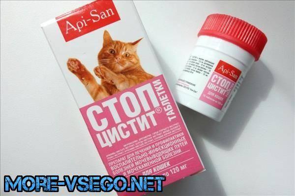 Симптомы и лечение цистита у кошек в домашних условиях, краткий обзор препаратов