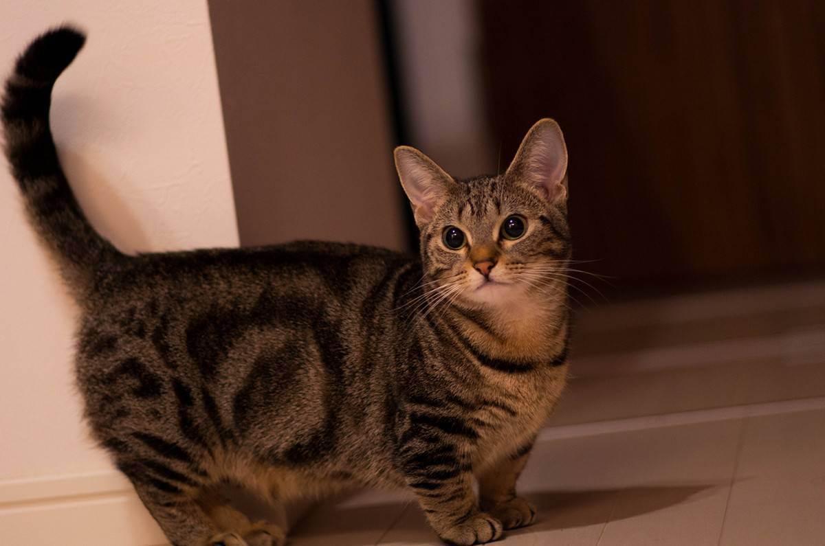 Самые красивые кошки и коты в мире