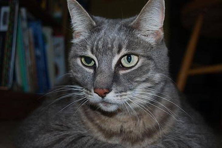 Почему у кошки разные зрачки один больше другой меньше | my darling cats