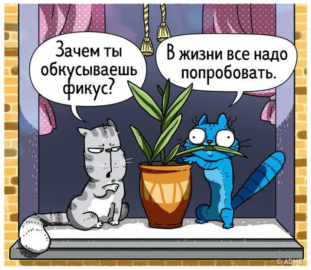 Что делать, если кошка плохо себя ведёт