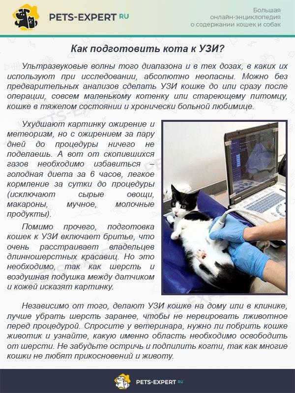 Как правильно подготовить кошку к стерилизации: анализы, прививки, чем кормить перед?