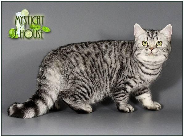 Какие кошки снимались в рекламе whiskas?