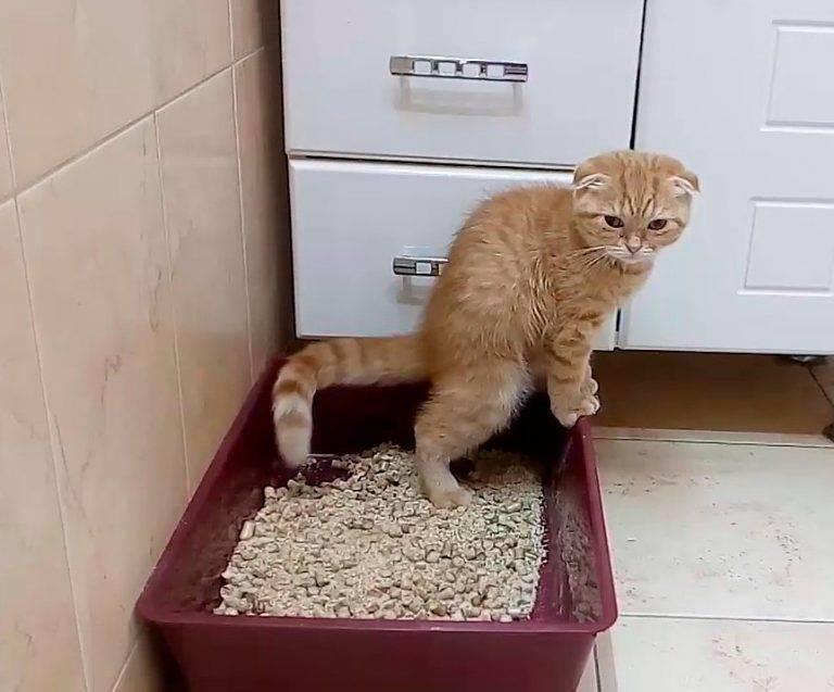 Кот перестал ходить в лоток