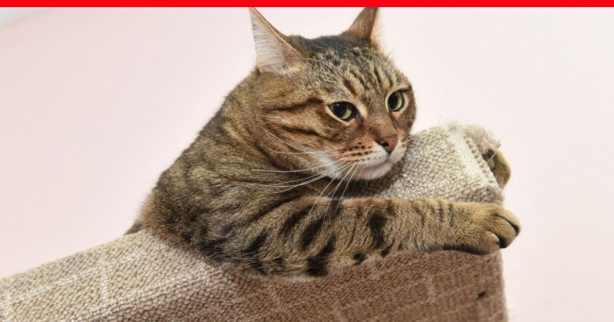 Смена корма у кошек