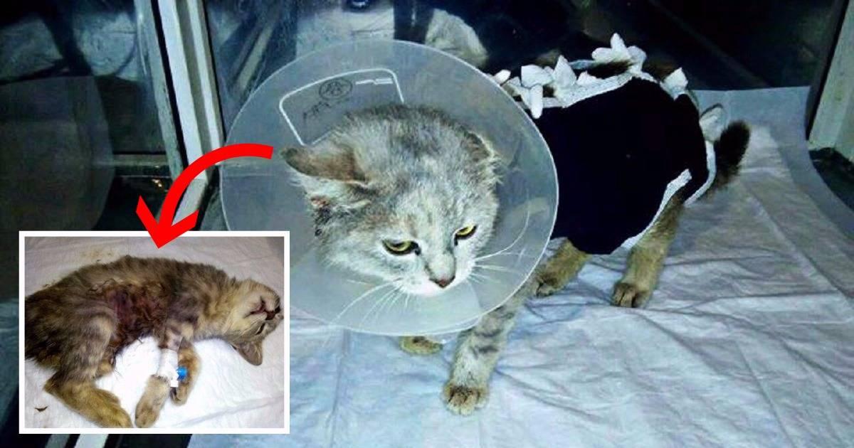 ᐉ чем усыпить кота в домашних условиях – как усыпляют кошек в ветклиниках? - zoomanji.ru