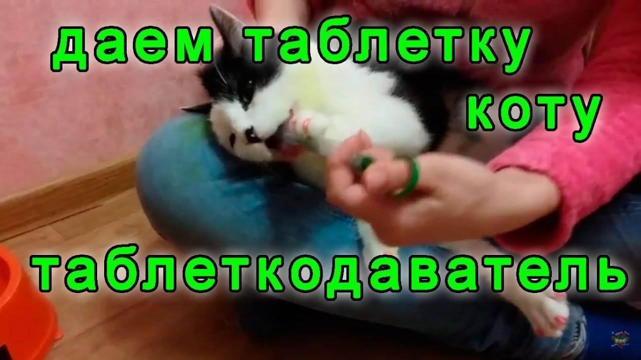 Как давать кошкам таблетки - wikihow