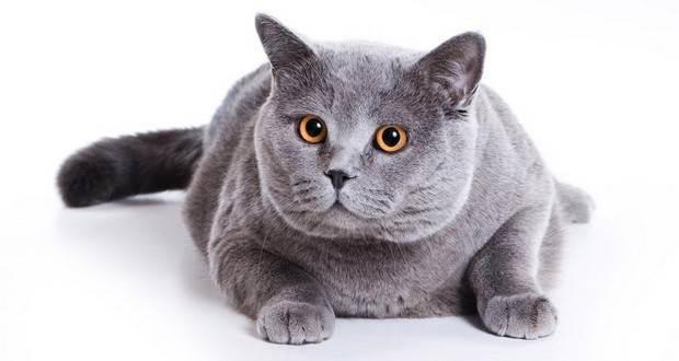 Миски, посуда для кошек