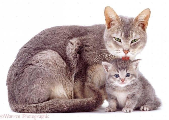 Память кошек и котов