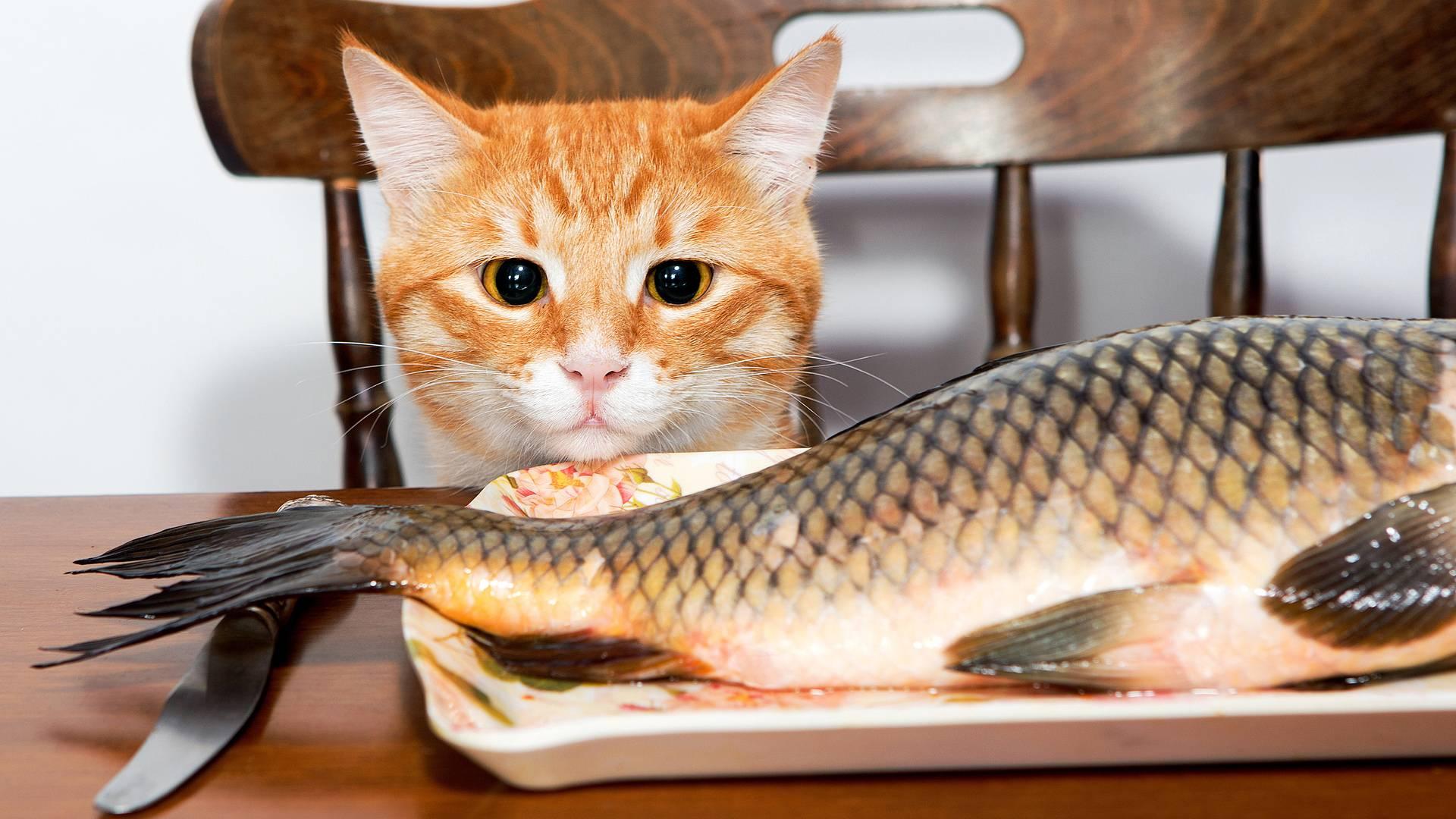 Можно ли кошкам и котам сырое мясо и другие сырые продукты?