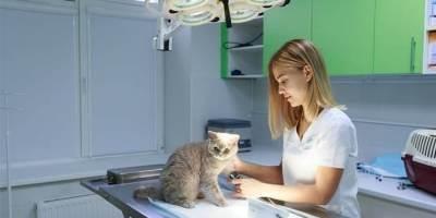 Бизнес: ветеринарная клиника вподмосковье