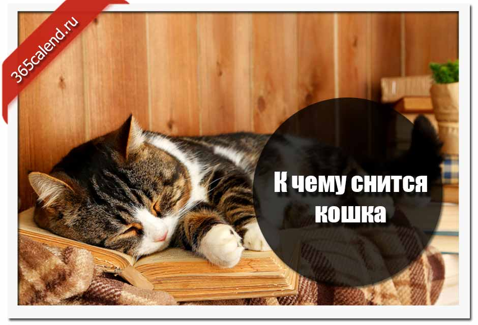 Сонник трехцветная кошка. к чему снится трехцветная кошка видеть во сне - сонник дома солнца