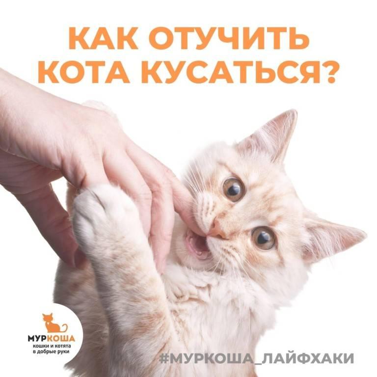 Как отучить кота кусаться: эффективные методы воздействия