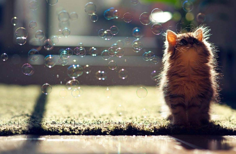 Можно ли мыть котёнка хозяйственным мылом