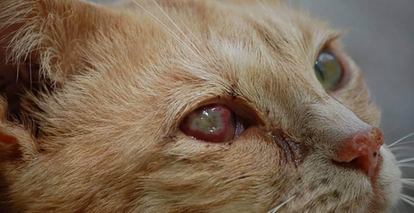Частые болезни домашней кошки: симптомы и лечение