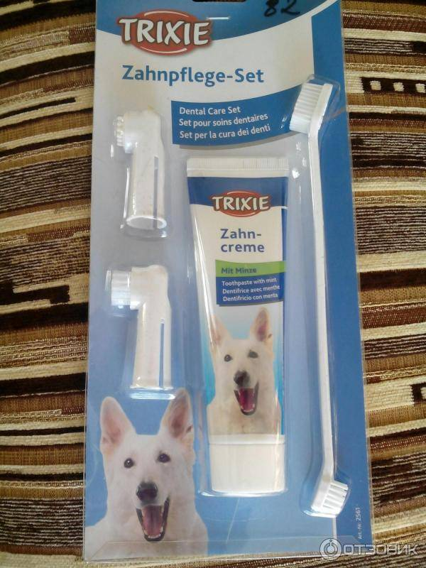 Как почистить зубы коту в домашних условиях: средства, инструкции, выбор зубной пасты для кошек