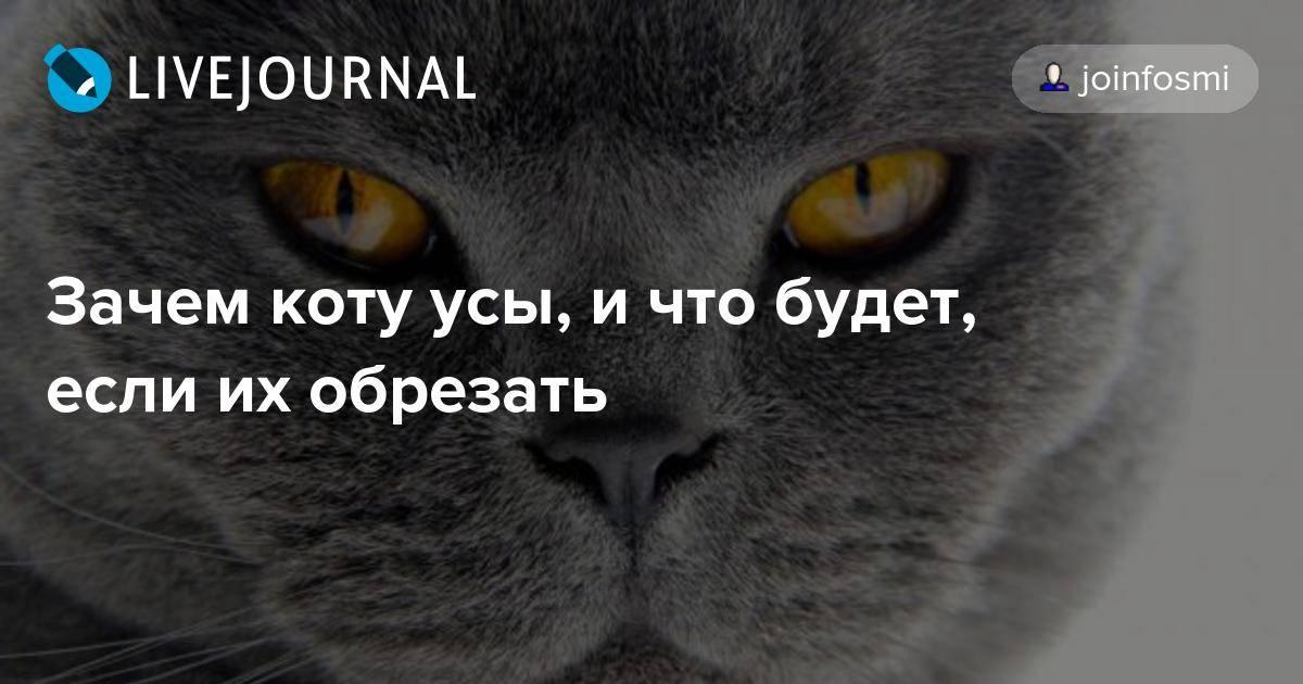 6 причин почему у кота выпадают усы - что делать