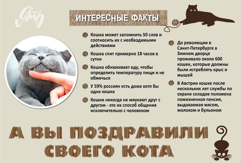 50 интересных фактов о домашних животных — общенет