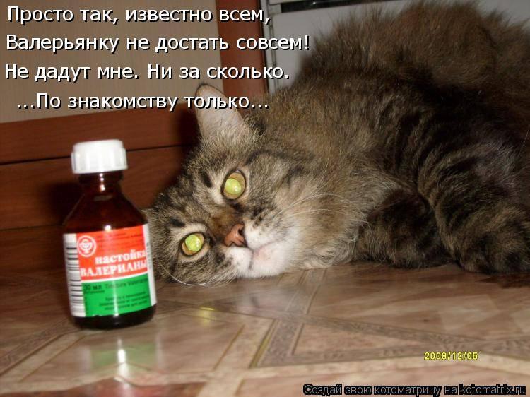 Как сказывается валерьянка на кошачьем организме? можно ли давать и зачем?