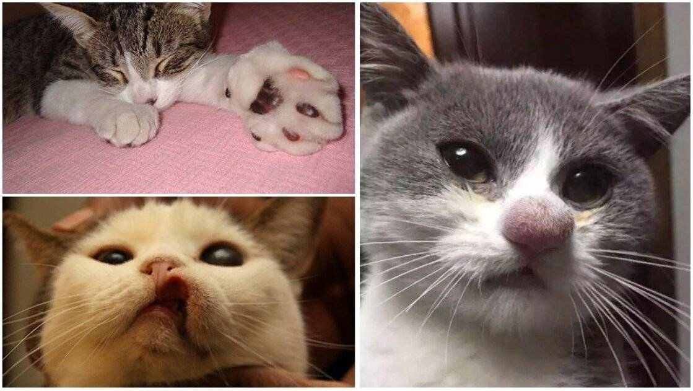 Что делать, если кота укусила оса?