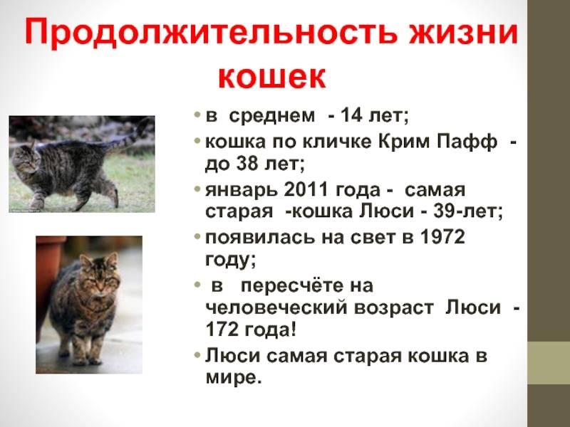 Самые старые коты в мире: сколько лет прожила самая долгоживущая кошка