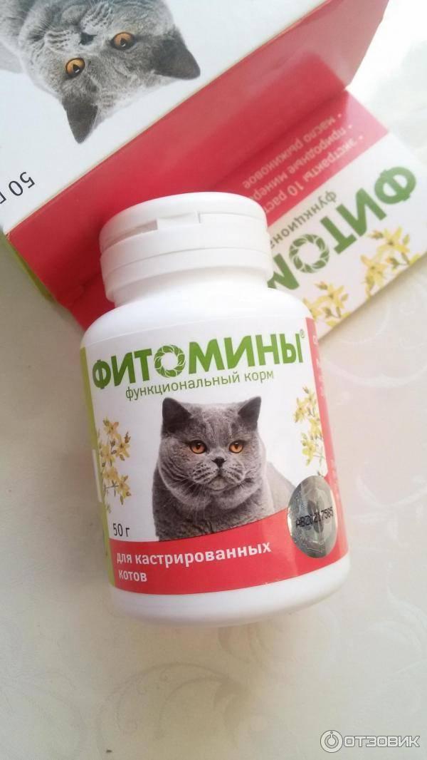 Какие лучше выбрать витамины для кастрированного кота?