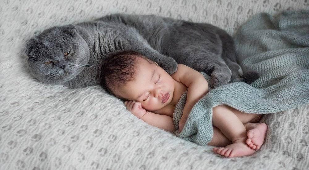 Новорожденный ребенок и кошка - питомник британских кошек arletta british