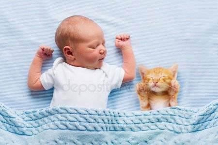Описание британских котят-от выбора до ухода за питомцем
