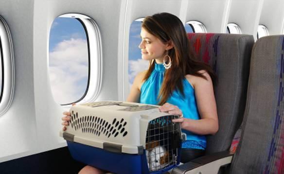 Ход котом: минтранс отказался упрощать правила авиаперевозки питомцев | статьи | известия