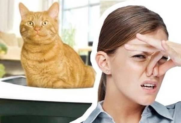 Чем удалить запах кошачьей мочи  что это и как предотвратить его появление
