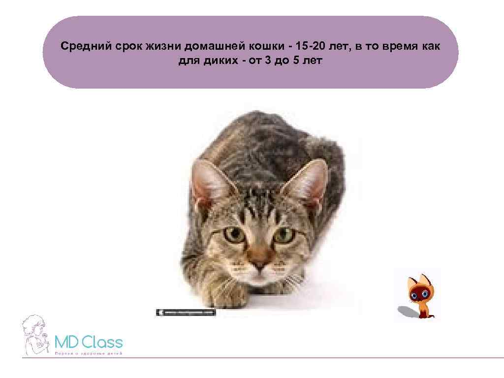 Сколько лет живут кошки: от чего зависит и как продлить продолжительность жизни