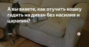 Почему кот ссыт на диван?