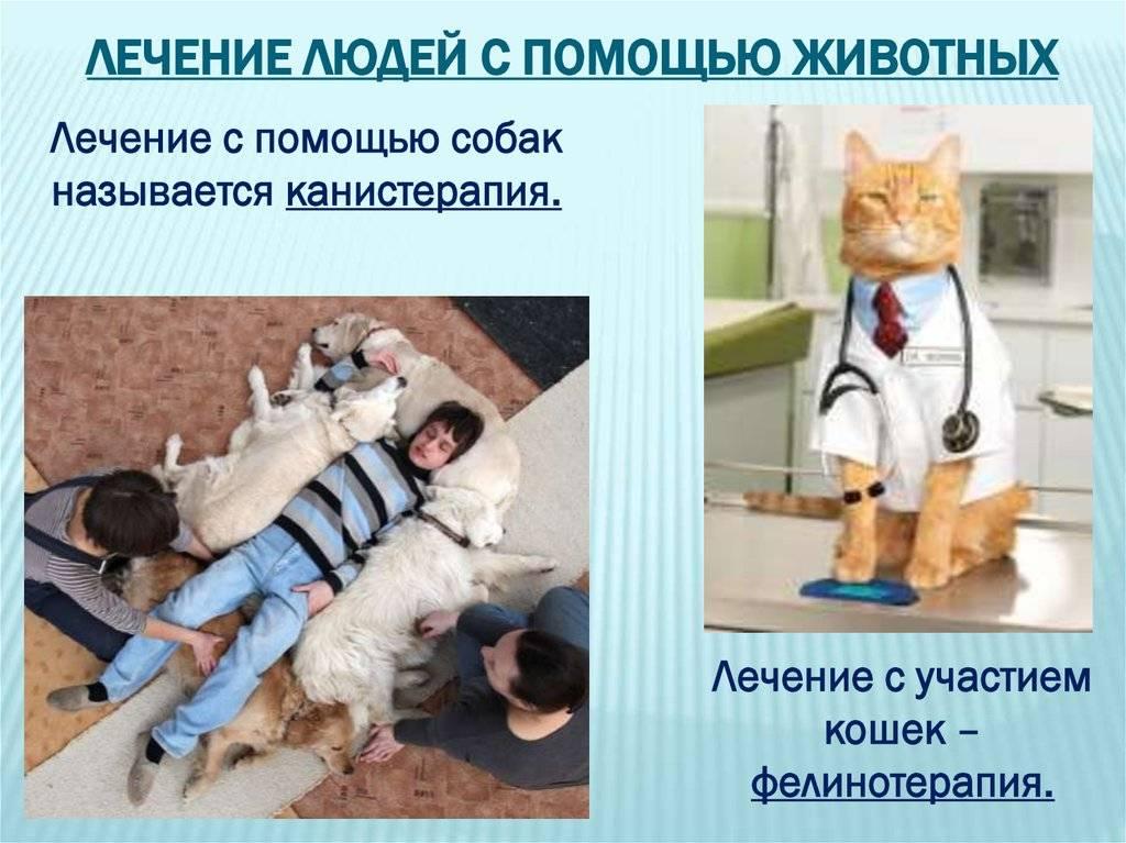 Кошкотерапия или какие кошки лечат людей