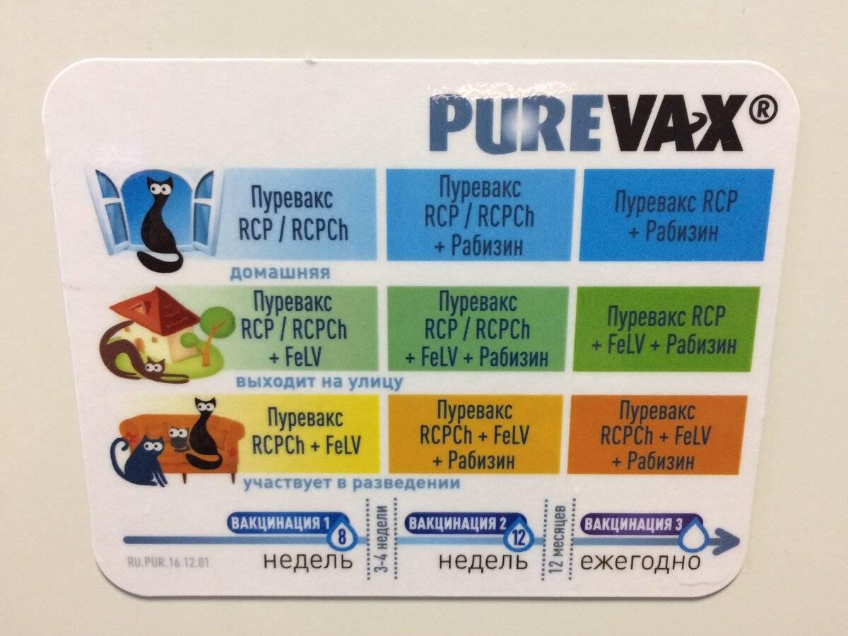 ᐉ пуревакс для кошек инструкция по применению, вакцина purevax - zooshop-76.ru