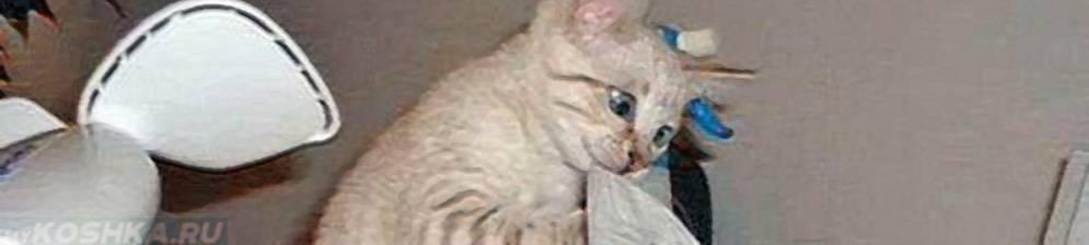 Кот чихает: что делать в домашних условиях