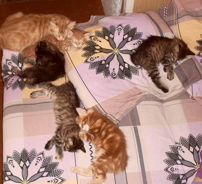 Аллергия на кошку. есть варианты? - запись пользователя маша (marymi) в сообществе домашние животные в категории дети и животные - babyblog.ru