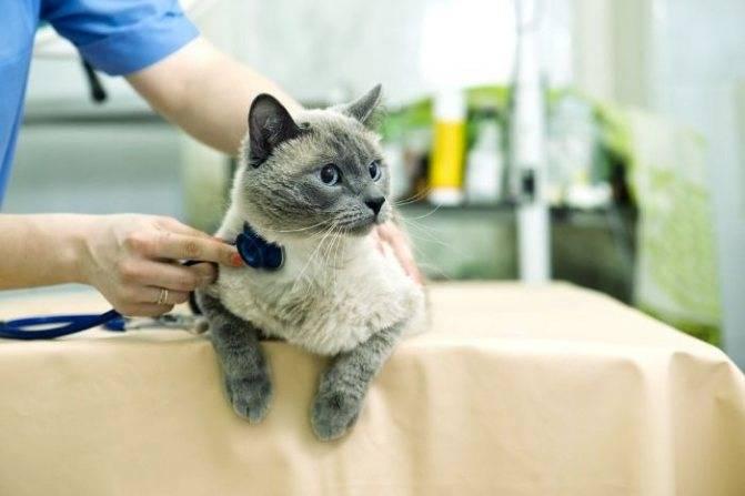Сахарный диабет у кошек — симптомы и лечение