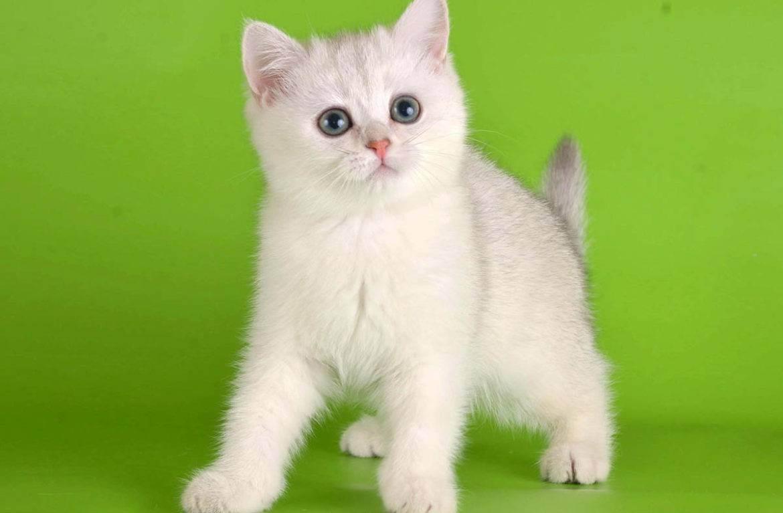 Как выбрать имя для кошки