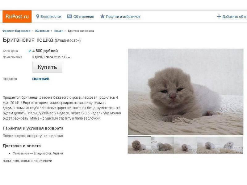 """Клуб любителей кошек """"москва"""""""