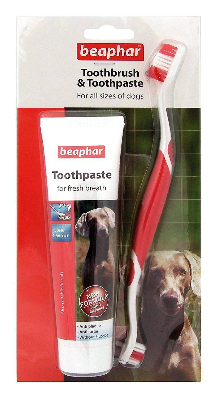 Можно ли чистить зубы кошке человеческой зубной пастой