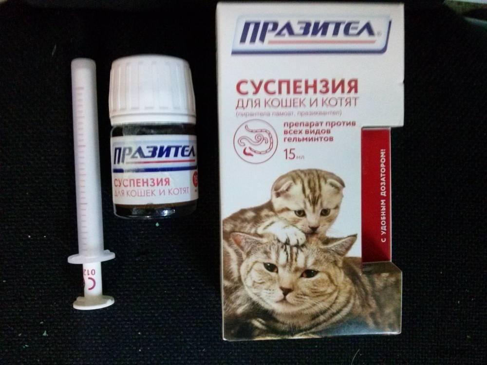 Как заставить кота съесть лекарство: таблеткодаватель и другие хитрости