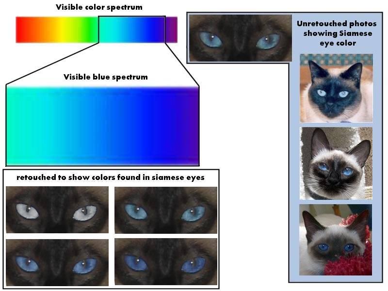 Какого цвета глаза бывают у кошек: самый редкий оттенок, породы котов с желтыми, зелеными и карими глазками