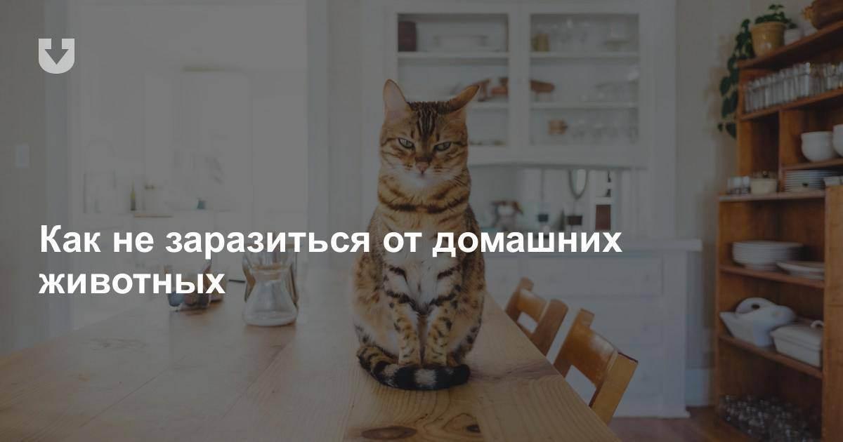 Для чего нужны кошки