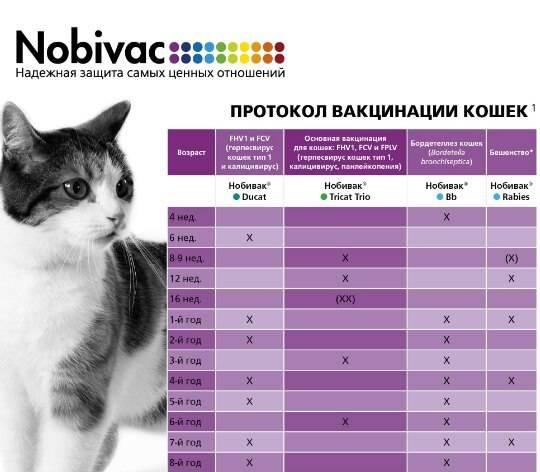 В каком возрасте делают прививки котятам