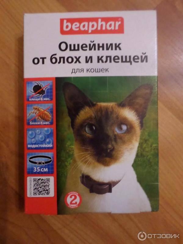 Ошейник от блох для кошек сколько носить - инструкция по примению