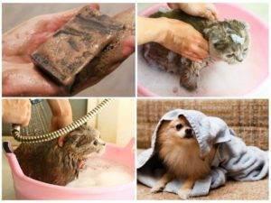 Мыть котят дегтрным мылом